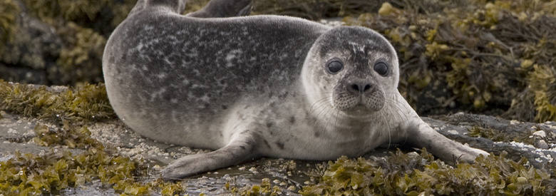 Experience nature and all its wonders along England's Coast